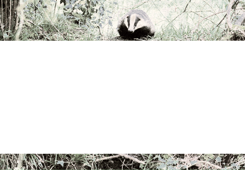 Add Badger Notepaper