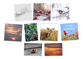 Cards by Occasion